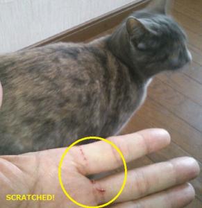 ネコにやられたキズ(後ろにいるのはウチの飼い猫で事件とは関係ありません)