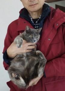 2歳のメス猫ミーコです